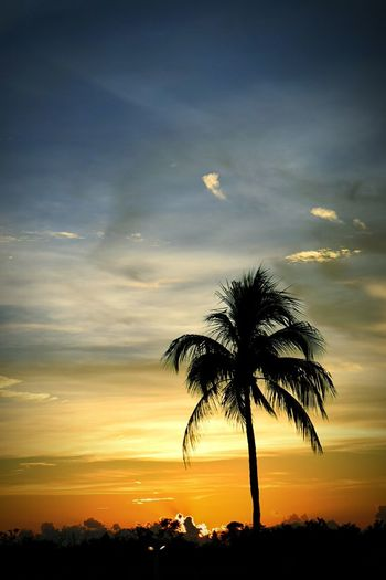 Tree Palm Tree Sunset Silhouette Dramatic Sky Landscape Beauty In Nature Sun Outdoors Beach