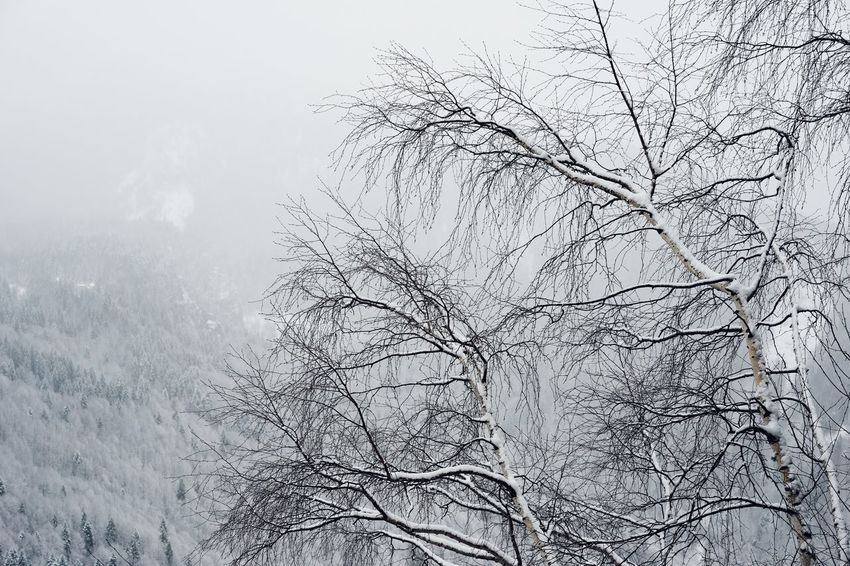 Nature Snow Mountain Fog Mist Tree Tree Trunk Landscape Pixelated Close-up Snow Covered Woods Tranquil Scene Snowcapped Foggy Branch Scenics
