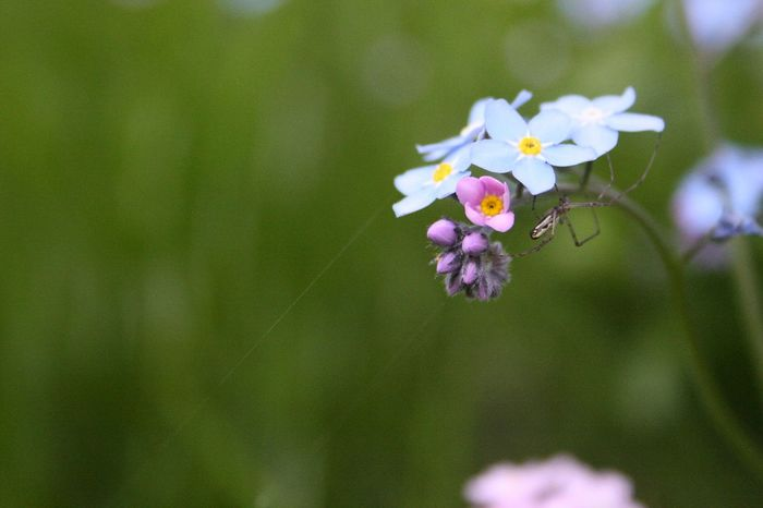 In the garden. Spider Spider's Web Beauty In Nature Flower Flower Head Fragility Insect Little Flower Nature No People Plant