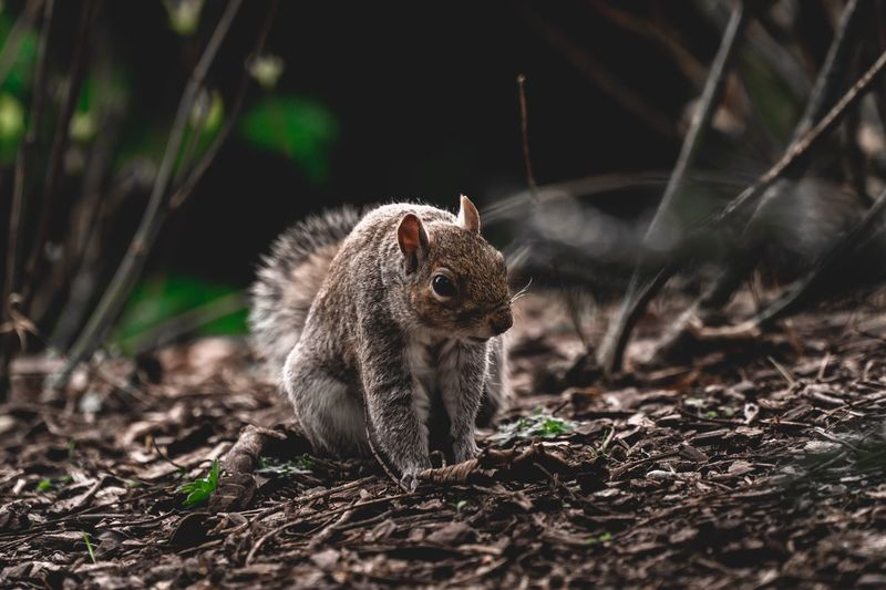 Outdoors Wildlife & Nature Mammal Spring Ground Adorable Park Animal Wildlife Mammal One Animal Rodent Animals In The Wild Nature No People Land Squirrel Chipmunk Full Length Vertebrate Outdoors Forest Eating Hungry Alertness