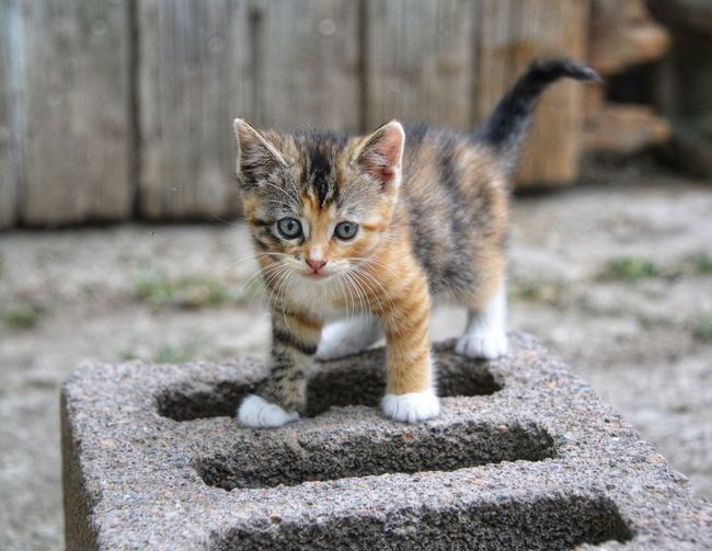 Portrait of kitten on concrete outdoors