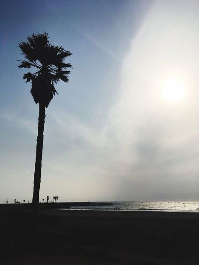 Palmtree Palm Tree Sky Sea Water Beach Land Scenics - Nature Beauty In Nature Cloud - Sky Sun No People