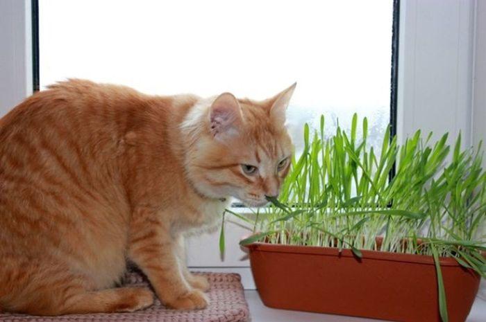 Cat рыжий кот Áfonya Афоня Afonsiko Cats Cat♡