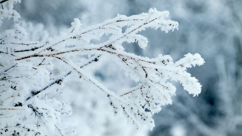 Cold Temperature Winter Snow Nature Weather No People Beauty In Nature Day Outdoors Gray Focus On Foreground Winter Decoration Frozen Ice White Color Beauty In Nature Season