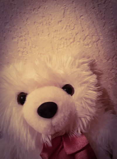 The Selfie White Selfie ✌ Copy Space Marketing Centered Background Wall All Smiles Bowl Bow Tie Cool In Front Looking At Camera Portrait Face Cute Fluffy Soft Close Up Beauty Portrait Smiling Looking At Camera Close-up Toy Animal Teddy Bear Stuffed Toy Toy Animal Representation Bear