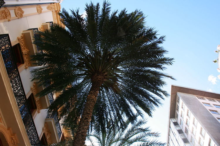 Palm head. Building Exterior Built Structure City Looking Up Low Angle View Palm Palm Head Palm Tree Sky Tree