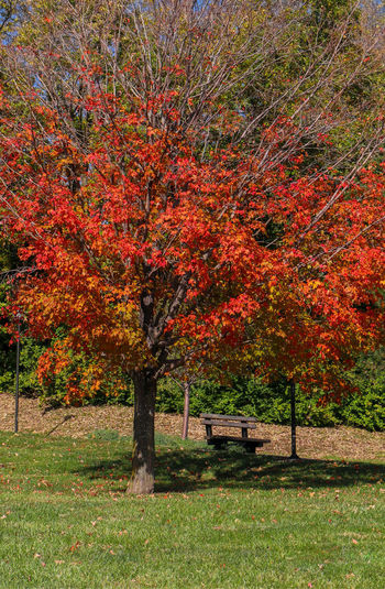fall scenes Fall Colors Beauty In Nature Day Fall Landscape Nature No People Outdoors Tree
