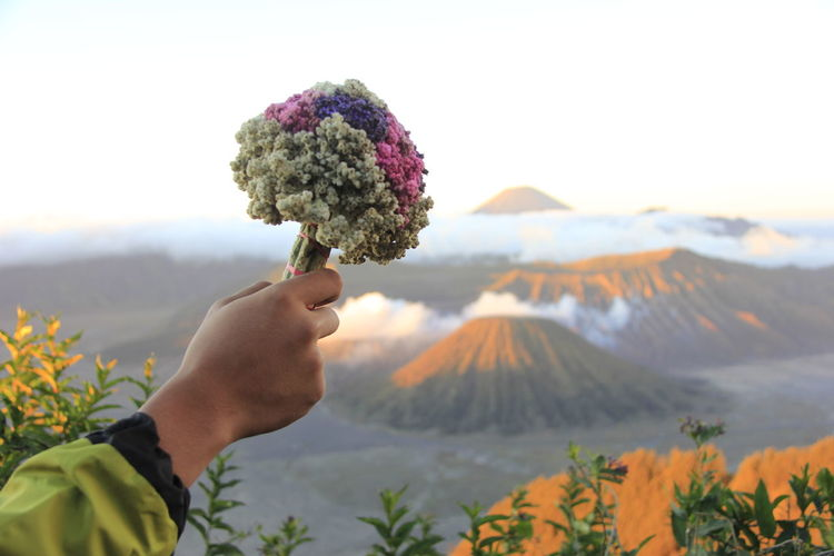 Cropped hand of woman holding flowers against sky