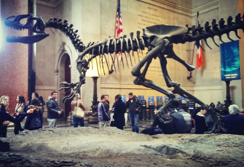 In the American Museum Of Natural HistoryMuseum Of Natural History of New York New York City Dinasaur Fossil Prehistoric Allosaurus NYC Museum