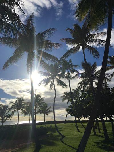 Islandlife Island EyeAmNewHere No People Day Outdoors Sky Cloud - Sky Palm Tree Sunset Ka Olina Oahu, Hawaii Oahu United States Holiday Vacations