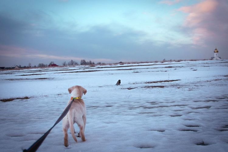 Dog standing on snowy landscape against cloudy sky at dusk
