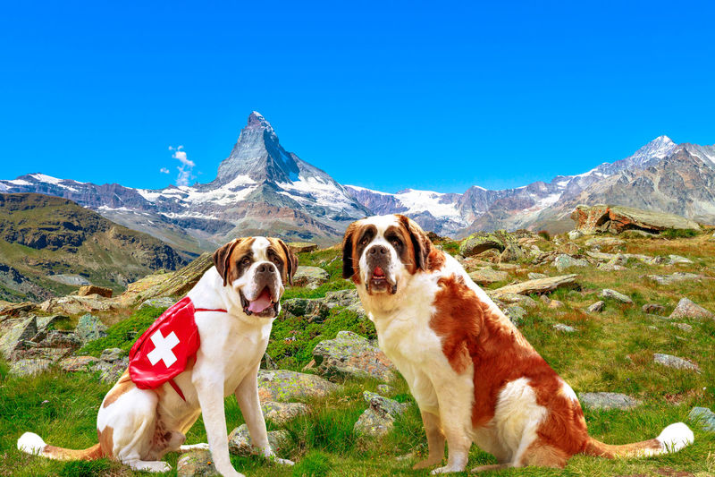 View of a dog on mountain against clear sky