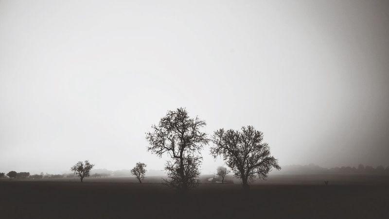 Landscape Blackandwhite Winter White By CanvasPop EyeEm Best Shots - Black + White