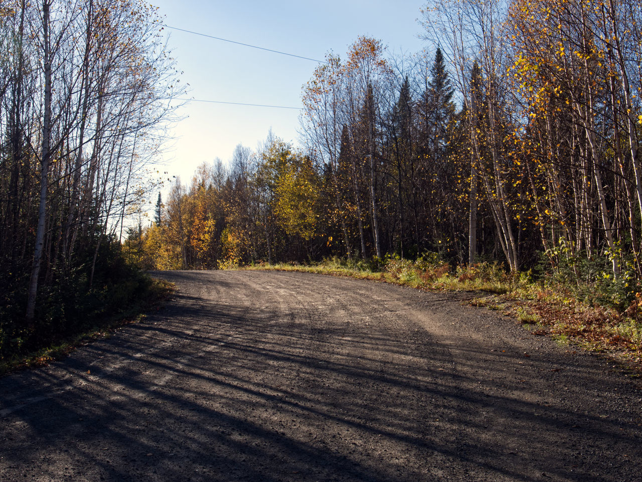 SURFACE LEVEL OF ROAD AMIDST TREES DURING AUTUMN