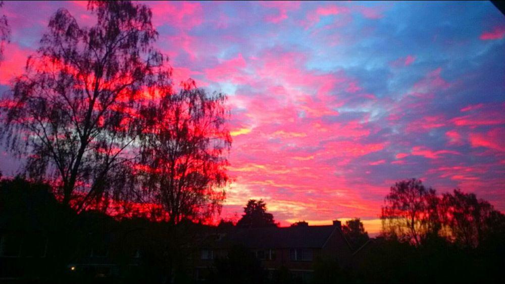 Sunset, dieren Dieren Sunset XperiaZ1