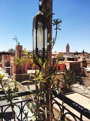 Marocco Sunshine Blue Sky Lamp Olive Tree Restaurant Familyrestaurant Medina Roof Terrace The Essence Of Summer Found On The Roll Go Higher