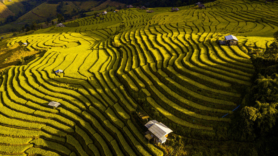 Rice terrace fields  in aerial view at pabongpeang , maejam village , chaingmai province of thailand