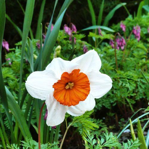 Flower Garden Spring Has Arrived