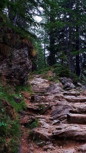 #mountain #summer2018 #outdoor Greatshoot Montagna Alpedevero Pioggiaesole Estate2018 Tree Forest Tree Trunk