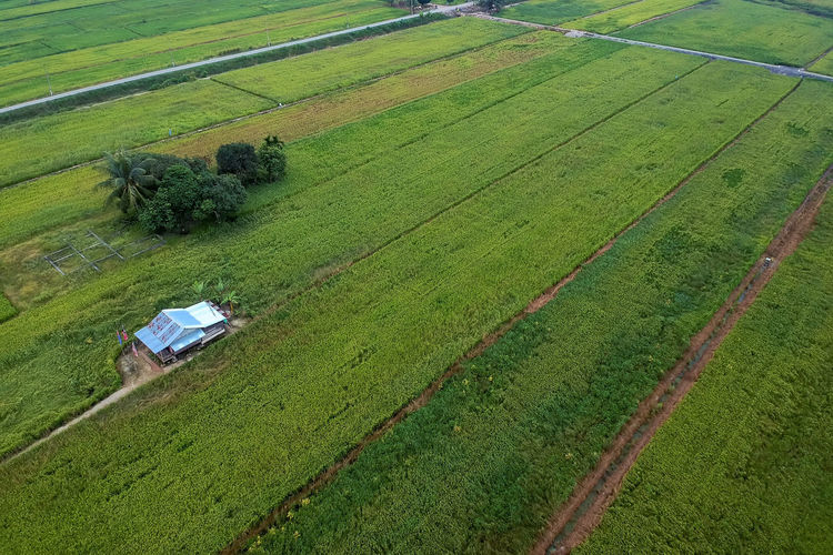 Field Environment Landscape Land Rural Scene Green Color Agriculture Plant Scenics - Nature High Angle View Farm Tranquil Scene Nature Growth Day No People Tranquility Transportation Beauty In Nature Aerial View Outdoors Plantation EyeEm Best Shots EyeEm Gallery EyeEm Selects