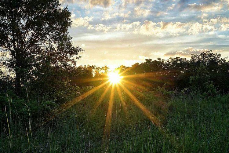 Sun shining through trees on field