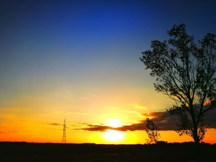 Sky Sunset Silhouette Tree Plant Beauty In Nature Orange Color Scenics - Nature Tranquility Tranquil Scene Nature Environment No People Copy Space Cloud - Sky Land Landscape Idyllic Outdoors Non-urban Scene Electricity  Power Supply