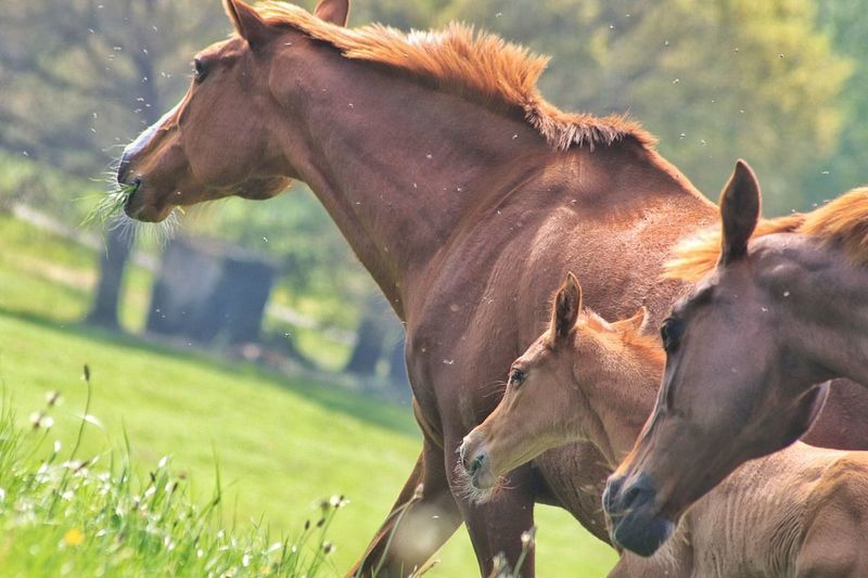 Horses caballos Animal Themes Group Of Animals No People Domestic Animals EyeEmNewHere Beauty In Nature Potro