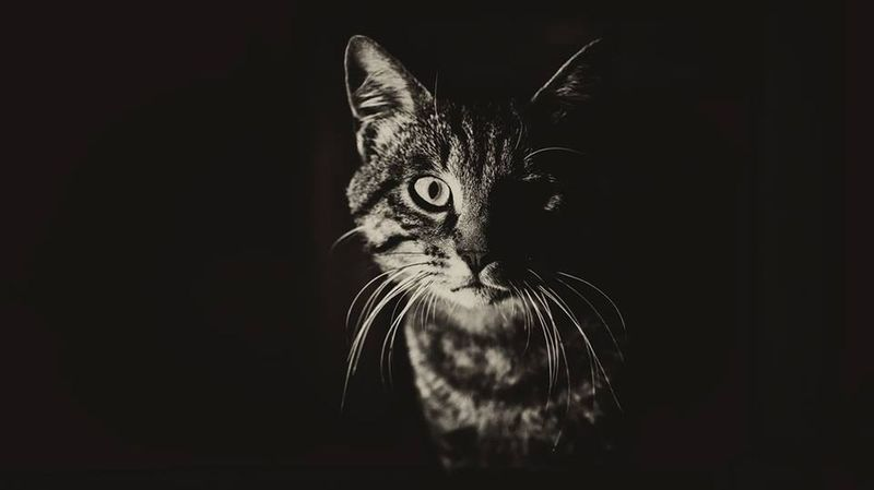Cat's Eye. Beauty Portrait Silhouette Photography