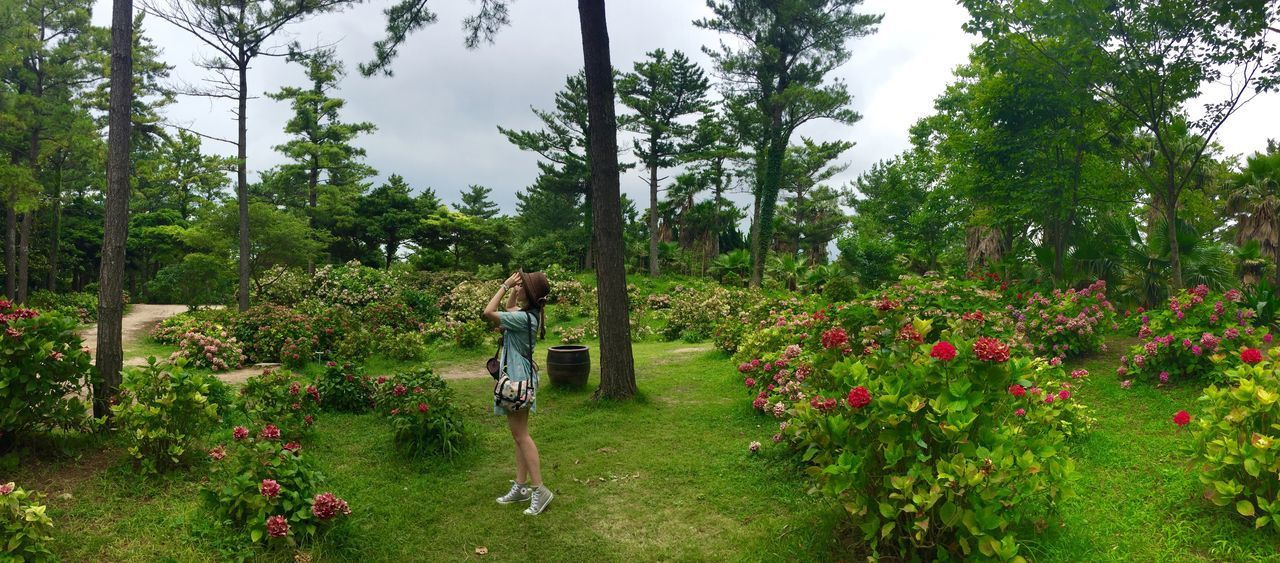 Panoramic View Of Woman Standing By Plants At Park