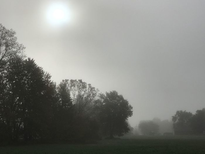 Foggy Morning. Tree Tranquility Outdoors Tranquil Scene Beauty In Nature IPhoneography IPhone Only Landscape Fine Art Photography Backgrounds Fog Misty Morning