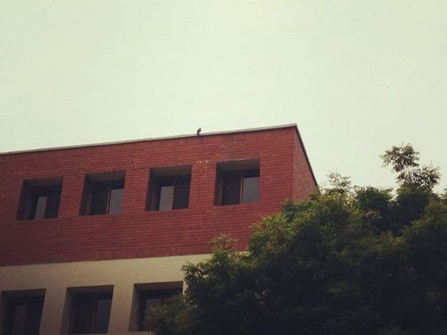 As the day comes to an end, some birds enjoy the cool winter breeze in their nest while some are homeless. Bird Alone Nature Lovefornature Winteriscoming Building College DSE Dsediaries Delhiuniversity Instagram