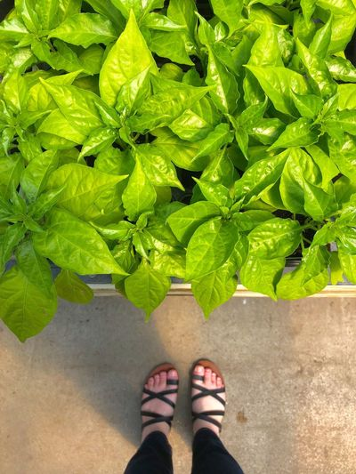 Low section of woman standing by plants