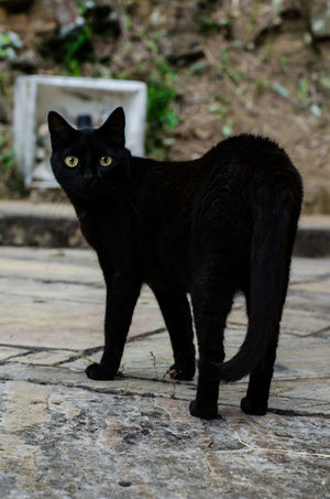One Animal Black Color Animal Themes Mammal Domestic Cat Full Length No People Feline Domestic Animals Outdoors Pets Day Leopard Relaxation Black Cat Photography Cat GatoNegro Animal Photography Pet Photography