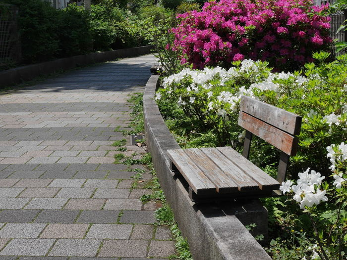 Bench Beauty In Nature Bench Flower Flowering Plant Nature No People Outdoors Park Park Bench