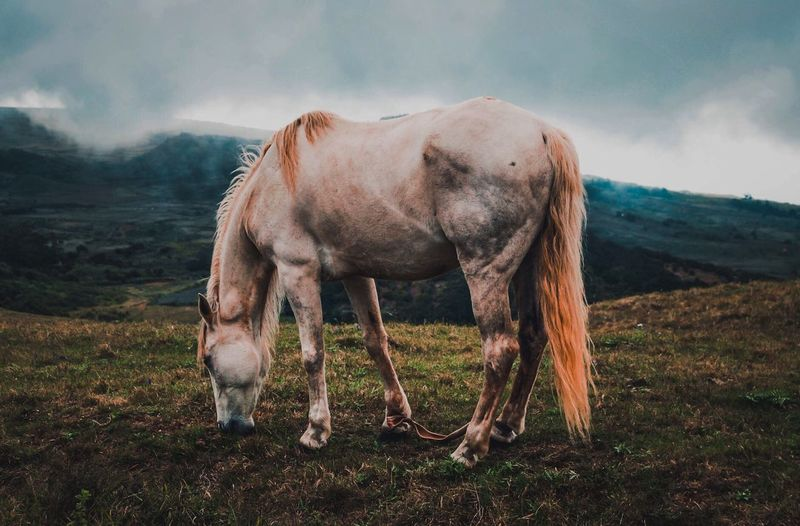 Mi amigo Horse Caballo EyeEm Selects Animal Themes Vertebrate Domestic Animals Sky Pets Field Animal Wildlife Grass Cloud - Sky No People Standing Nature Domestic Full Length Livestock Day Land