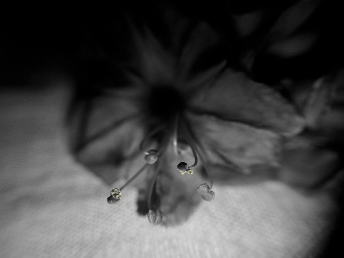 Monochrome Photography Check This Out New Learn And Shoot: Simplicity Blossom, Macro Smartphone Photography At Home :) Clarity Color Splash Yellow Pollen Taking Photos Relaxing New Hobby Trying Macro Newbie ✌ Macro_captures Feeling Inspired Flower