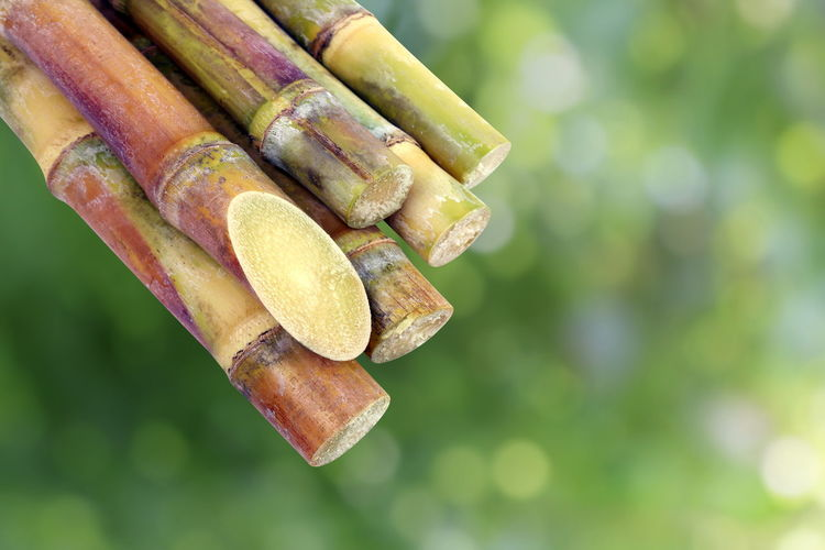 Sugarcane, Cane, Sugarcane piece fresh, sugar cane on green nature bokeh background, Sugarcane agriculture Sugarcane Cut Sugarcane Fresh Close-up Day Focus On Foreground Food Food And Drink Freshness Green Color Healthy Eating Nature No People Outdoors Raw Food Selective Focus Still Life Sugarcane Sugarcane Field Sugarcane Juice Sugarcane Plantation Sugarcane Seller Sugarcane Tree Sugarcanejuice Vegetable Wellbeing