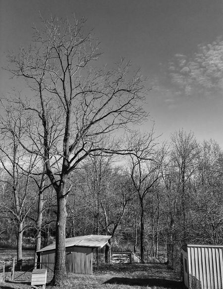 Blackandwhite Bare Tree Tree Built Structure Architecture No People Day Outdoors Branch Building Exterior Nature Sky Beauty In Nature