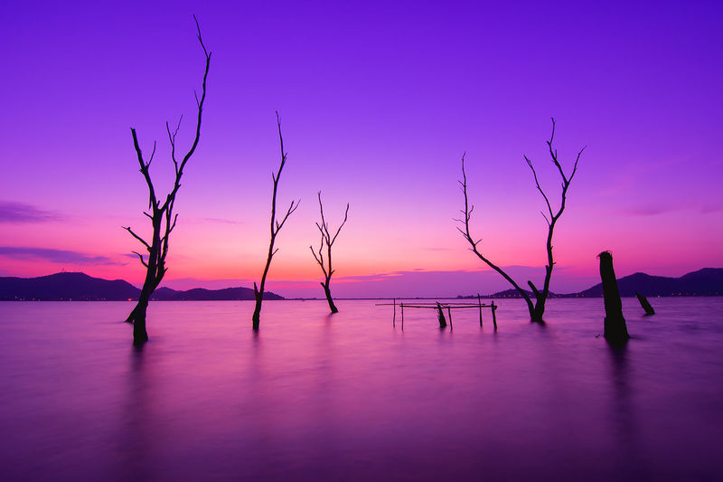 Silhouette trees by sea against sky at sunset