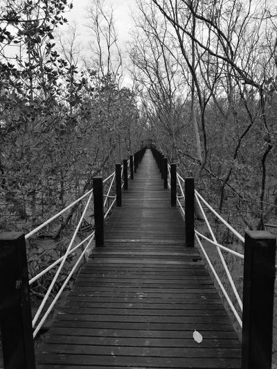 Tree The Way Forward Nature Beauty In Nature No People Footbridge Outdoors