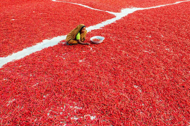 High angle view of woman with red chili peppers