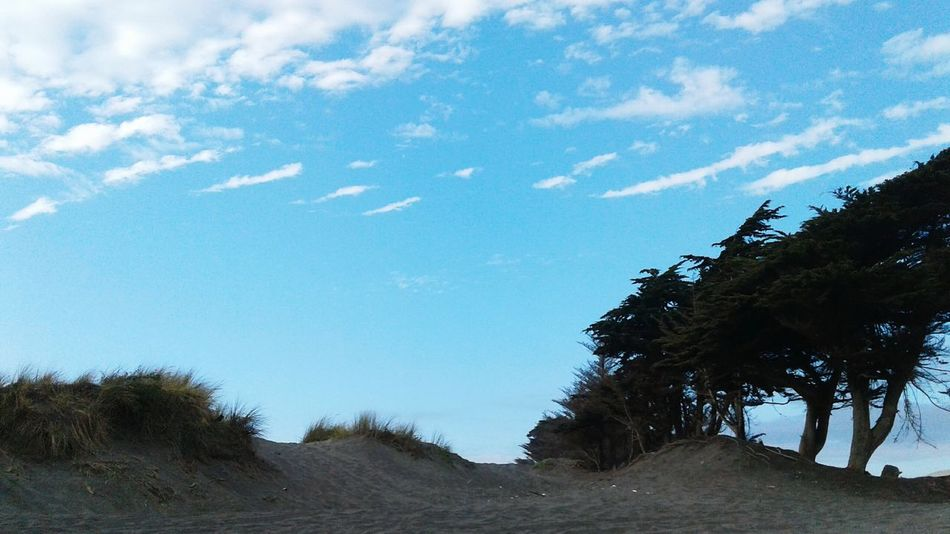 Tree Nature Day Nature Beach Dunas