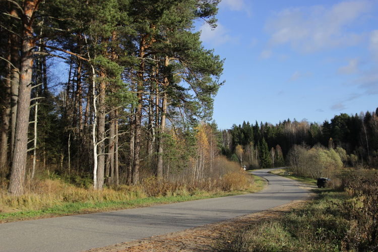 Road amidst trees in forest against sky