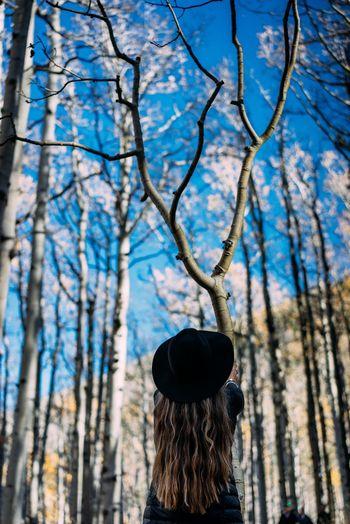 Arizona Flagstaff Lockettmeadow Fall Fall Beauty Mountains