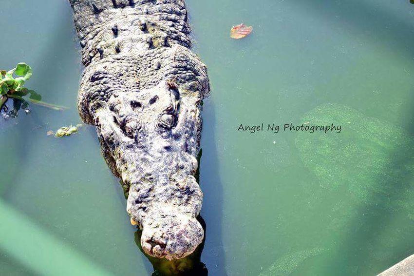 突然心就累了,想躺着。Crocodilesfarm Langkawi Travel Photography