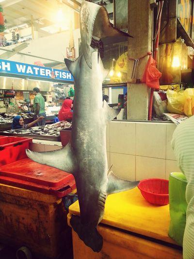 Poor hammerhead shark !! Fresh From The Ocean Fish
