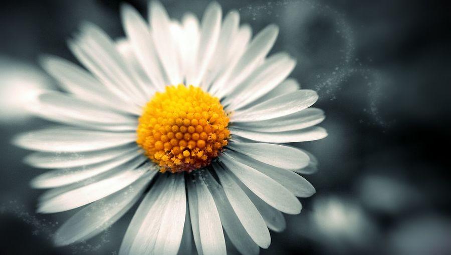 Multa ispirazione. EyeEm Best Edits EyeEm Best Shots EyeEm Nature Lover EyeEm Flower