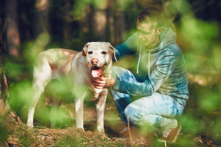Summer day with dog in nature. Young man with his labrador retriever on the walk in forest. Adorable Caress Cheerful Cute Pets Dog Dog Life Dog Love Dog Lover Dogslife Domestic Animals Forest Forestwalk Friends Friendship Happy Happy Time Hug Nature Pet Pet Photography  Together Togetherness Touching Trip Walking