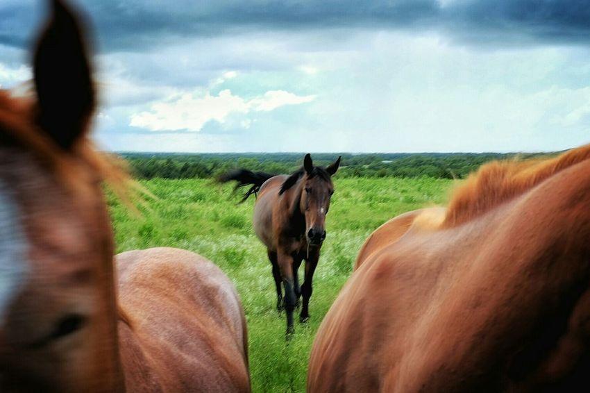 https://youtu.be/T86BKZ4eRGY Horses Capturing Freedom