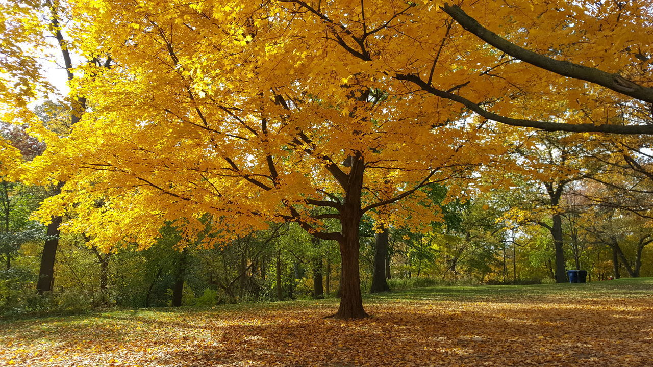 VIEW OF AUTUMNAL TREES IN THE PARK